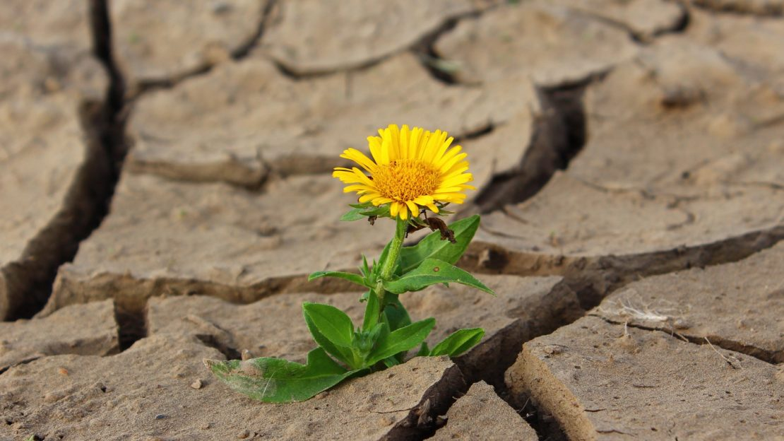 Nice flower is rising from very dry landscape